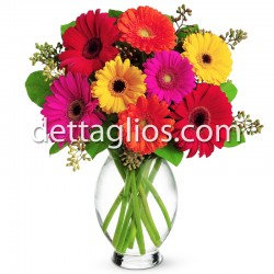 Gerberas Multicolor